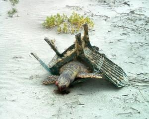 Jak to sie stało ,że morski zółw zaklinował sie w plastikowym krześle???Tak ,się dzieje ,gdy ktoś nie ,wie gdzie jest miejsce na nieużywane rzeczy....